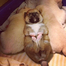 Shiba Puppies Born 2/1/12