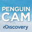 Penguin Cam Underwater