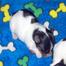 Yorkshire Terrier puppy Cam 2