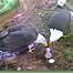 "AEF's ""Eagle Nest Cam"" #4"