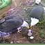 "AEF's ""Eagle Nest Cam"" #4"