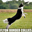 FlyOn and BSL Border Collie Pups