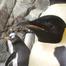 SeaWorld Penguin-Cam