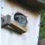 Hoot &#039;n Annie Screech Owls, 2012 - Outside Cam