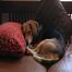 Beagle_Cam