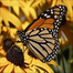 Second Grade Butterfly Watch