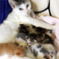 Kittens try to stop mom from eating. Cutest mealtime ever