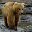 Katmai National Park, Alaska - The Riffles