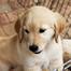 Misty's Pups - Nursery Cam