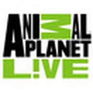 Онлайн тв канал анимал планет