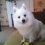 Tiana puppy watch
