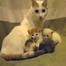 Kittens Cam