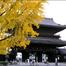 東本願寺前ライブカメラ 京都 JAPAN KYOTO 森信三郎商舗
