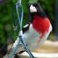 Peephole birding at the Peephole Cafe