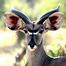 African Safari Camera