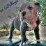 _101 Bulldogges_