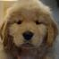 Piper Pups 10/9/16