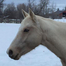 Millie Foal Cam