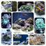 v1ol3nt's Reef