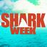 Mega Shark #2