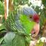 Lila Parrot Cam