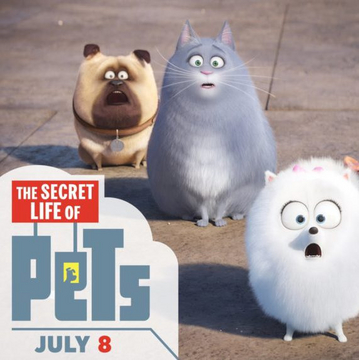watch the secret life of pets 2016 full movie hd on ustream watch online the secret life of. Black Bedroom Furniture Sets. Home Design Ideas