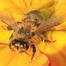 Graham's Bees