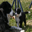 Contact Point's Driven to Win - Puppycam