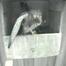 Kestrel nest cam (torenvalk NL)