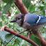 Flaco's Bird Cam
