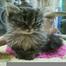 FFRC Kitty Cam