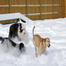Blizzard of 2014 at Affectionate Pet Care