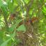 Cardinal nest cam