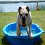 Bulldog Piknik