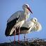 Stork Family Nest