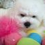 Cambeas Puppies-http://cambeas.com