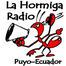 radiolahormiga