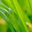 GreenMonk Energy and Sustainability show