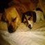 Marley (Puggle) & Winnie Cam