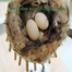 Hummingbird Babies Webcam