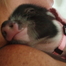 Best Tiny Pigs: Live Action