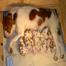 Shamrock Brittanys Puppy Cam