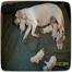 KTL lab puppy cam