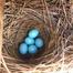 Slidell Bluebird Cam 2015