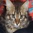 Rescue Kitten Cam