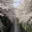 中目黒桜並木 定点カメラ