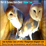 THREE Owls! - Errol (Flynn) the intruder