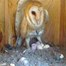 2/23/13 Owl visit