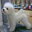 Bichon Frise Puppies-727-642-5488
