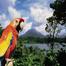 Live Jungle Cam - Atenas, Costa Rica